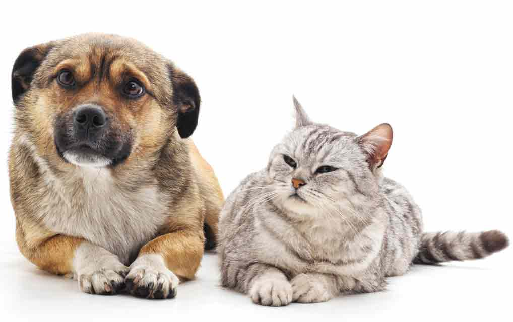 These seven items can poison your pet.